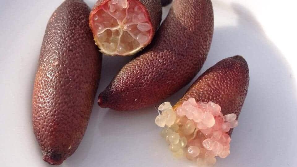 Finger lime - Citrus australasica #3