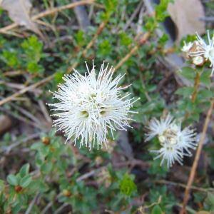 Plants Tucker Bush