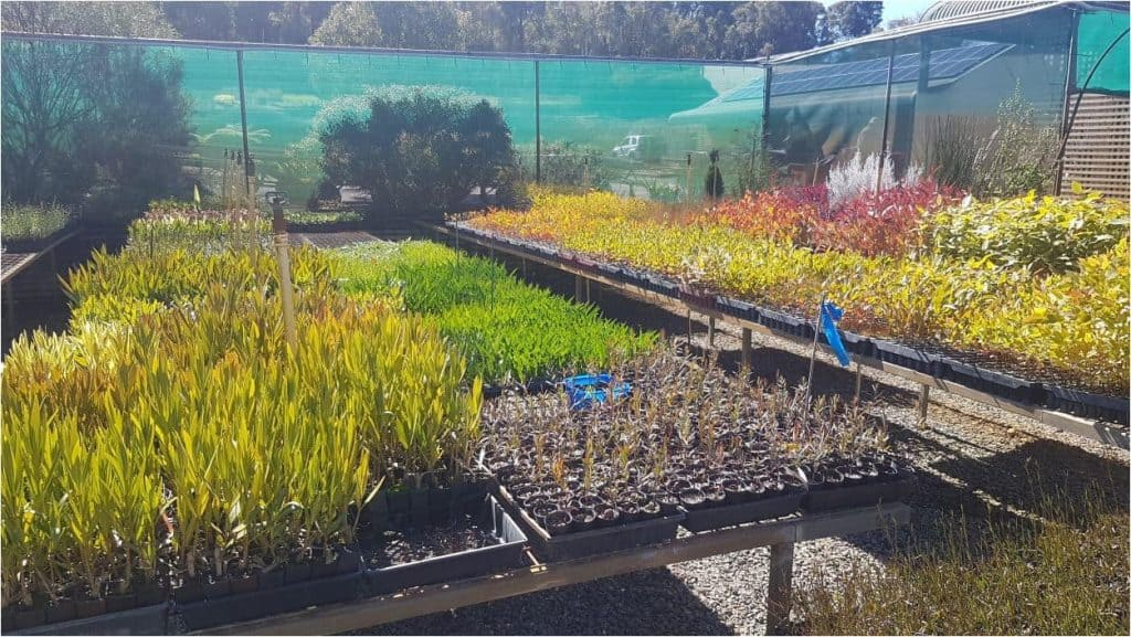Tucker Bush babies enjoying the WA winter sunshine at Domus Nursery