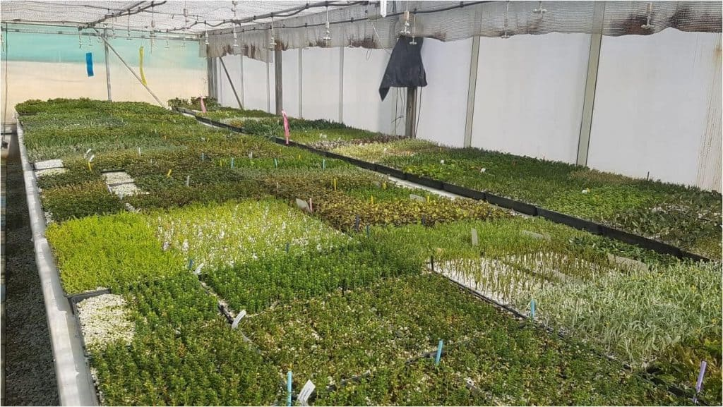 Tucker Bush seedlings and cuttings growing in a heated greenhouse environment