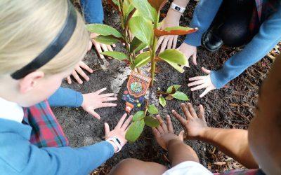 Choosing bushfood plants for a child-friendly backyard