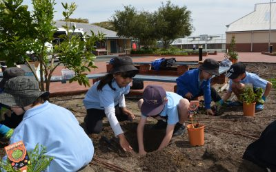 Win a Tucker Bush garden for your school